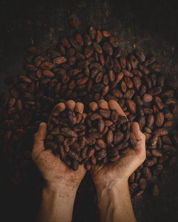 the cocoa market